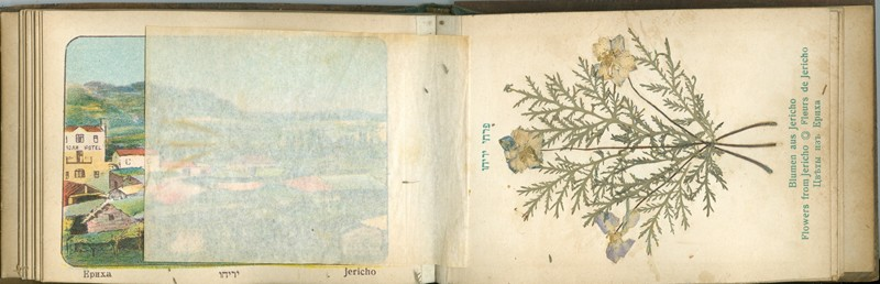 Lot 22 - judaica picture post cards -  Negev Holyland 92nd Holyland Postal Bid Sale